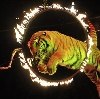Цирки в Коломне